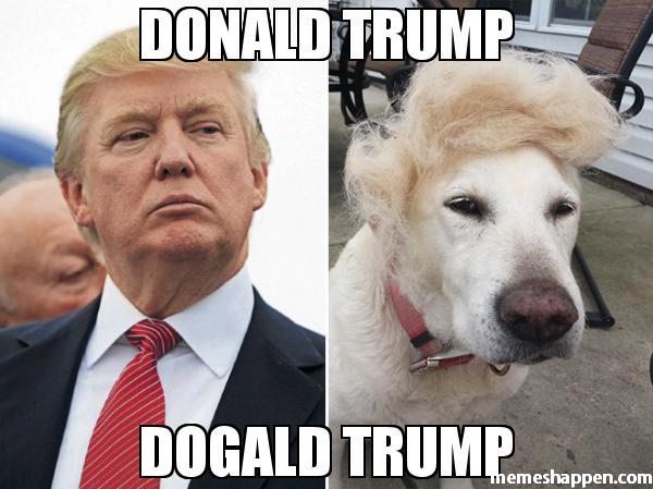 donald-trump-dogald-trump-meme-46432